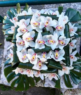 Coussin d'orchidées