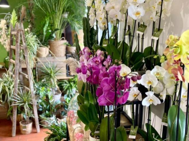 Comment entretenir mon orchidée, les conseils de votre fleuriste Fior Fleurs