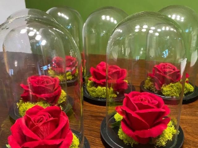 Cloches de rose rouge